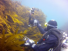 18 July 2016 - Scillies Trip PICT0206 (severnsidesubaqua) Tags: scillies scilly scuba diving