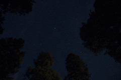Sequoia Nights (evaxebra) Tags: