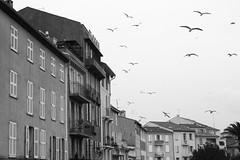 (marinamemira) Tags: niza nice city ciudad cité bw byn fly birds sky freedom nostalgic sad