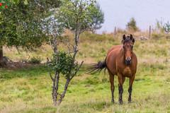 Horse (Henrik Axelsson) Tags: bergslagen hst lake ludvika smedjebacken vatten water dalarnasln sverige se