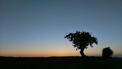 Sunset  Sunset Silhouette Tree Tranquil Scene Landscape Tranquility Copy Space Scenics Clear Sky Beauty In Nature Nature Sunset Field Growth Blue Branch Outdoors Single Tree Dark Outline Remote at Aeppelboom @JN (O901) Tags: sunset silhouette tree tranquilscene landscape tranquility copyspace scenics clearsky beautyinnature nature field growth blue branch outdoors singletree dark outline remote