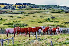 Horses in the Graburn Gap, Alberta (peggyhr) Tags: peggyhr horses fence water brown white beige green hills grasses trees shrubs sky clouds bushes img6401ab alberta canada thelooklevel1red thelooklevel2yellow infinitexposurel1 frameit~level01~ thelooklevel3orange infinitexposurel2 30faves~ level1peaceawards thegalaxy thelooklevel4purple zodiacawards niceasitgets~level1 level1photographyforrecreation thegalaxyhalloffame niceasitgets~level2