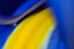 Deep throated Iris (OzzRod) Tags: pentax k50 supertakumar28mmf35 pentaxsingleinaugust2016 flower iris blueyellow macro lensreversed uncropped