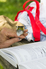 Chestnut-sided Warbler (Arlen Breiholz) Tags: animals birdbanding birds cameras eos7d fwkentpark iowa johnsoncounty places songbirds usa wildlife