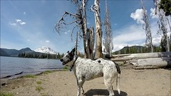 follow Blanca into Sparks Lake (Claudia Knkel) Tags: sparkslake cascadelakes oregon blanca dog bordercolliemix gopro hero3silver southsister brokentop underwater