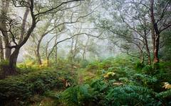 Avenue (J C Mills Photography) Tags: peakdistrict derbyshire landscape woodland path trees birch bracken autumn mist fog stantonmoor