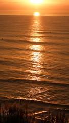 (//DannyBoy//) Tags: biarritz btz ctedesbasques surf sunset ocean atlantique joncs surfers seagull mouette
