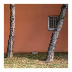 quivoque (hlne chantemerle) Tags: troncsdarbre deux mur fentrebarreaux orange herbe vert ombre carr treetrunks two barredwindow wall grass green shadow square