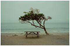 LA 77 (misu_1975) Tags: kodak portra 400iso jobo cpp2 c41 leica m6 film la losangeles ca ocean beach sand