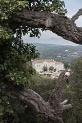 hotel de ville, Ramatuelle (philippa huber) Tags: provence ramatuelle tree village medieval france hoteldeville townhall