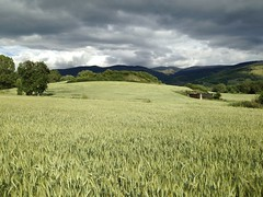 Windy wheatfield (apalepexapandrapa) Tags: wind nature green wheatfield age puigcerd pirineus sky clouds