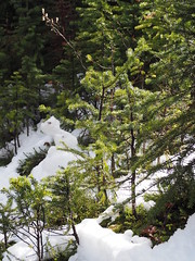 #Banff & #Jasper #Roadtrip through the Canadian Rockies (Creativelena) Tags: jasper banff roadtrip canada explorecanada drive rockymountains train travel slowtravel mountain mountains nationalpark nature peytolake lake adventurefitness adventure banffcreativeartscentre creative art artist writing workshop retreat ice glacier snow inspiration