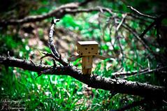 ....balance... (JoyceHemmingway) Tags: wood green nature licht amazon natur gras grn sonne wald danbo