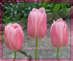 """""""The heart of a mother is a deep abyss at the bottom of which you will always find forgiveness."""" ~ Honore de Balzac (ellenc995) Tags: pink flowers love tulips mothersday coth supershot imissmymom akob abigfave citrit platinumheartaward thesuperbmasterpiece rubyphotographer awesomeblossoms 100commentgroup naturallywonderful top25purplepinkandblue thesunshinegroup sunrays5 challengeclubchampion"""
