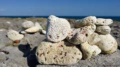 Le corail n°1 (CGDP) Tags: rock mexico nikon pierre f14 ngc yucatan mexique fx d800 corail nikoniste pixelistes nikonpassion cgdp afs24mmf14g