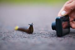 Pose (Timo Vehviläinen) Tags: camera nature pose dof bokeh snail ixus etana canonef135mmf2l
