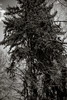 o.T. (rucko fotografie) Tags: tree forest wald taunus baum