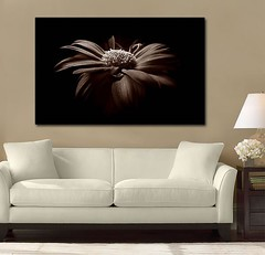Stunning Beauty Brown (Simply Canvas Art) Tags: art wallart flowerart homedecoration flowerprints flowercanvas flowerwallart flowercanvasprints flowercanvasart flowercanvaswallart