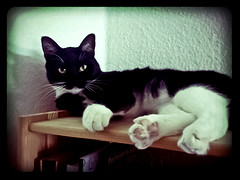 Marie ruht (Das halbrunde Zimmer) Tags: morning pet marie cat germany deutschland dresden sony saxony sachsen katze schwarzweiss morgen haustier lomofake entspannung liegen ruhe hauskatze handyfotografie flickrandroidapp:filter=berlin