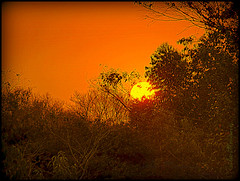 Feliz quarta sunset! (silwittmann) Tags: wood trees sunset brazil sky orange sun sol nature silhouette brasil natureza pr parana floresta mandaguari silwittmann sitiorochedo