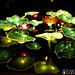 7657273442 49c37361fe s Enchanting Glow: The Lantern Festival at Missouri Botanical Gardens