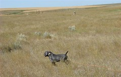 "12 weeks Gus searching30 • <a style=""font-size:0.8em;"" href=""http://www.flickr.com/photos/66999112@N00/7672719778/"" target=""_blank"">View on Flickr</a>"