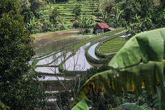 IMG_1609 (Two people two cameras) Tags: indonesia bali asia travel photography photo nature riceterraces ricefields rice fields green water landscape