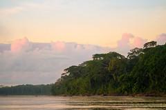 Amazon rain forest ./ Fort d'Amazonie (geolis06) Tags: geolis06 prou peru per amriquedusud southamerica romanu amazonie amazonia rainforest jungle fort forest madrededios biospherereserve manu parcnationaldeman mannationalpark 2016 patrimoinemondial unesco unescoworldheritage unescosite pantiacollatour