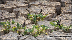 Crack Earth, Wadi-e-Hanifa, Riyadh, Saudi Arabia (Adeel Javed's Photography) Tags: crackearth wadiehanifa riyadh saudiarabia adeel javed