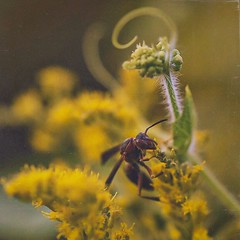 Too close for comfort (Melinda G Pix) Tags: sting insect nature summer bug wasp