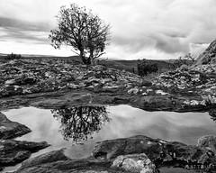 IMGP3005-Edit-2 (Matt_Burt) Tags: hartmanrocks bw lichen puddle reflection stormy tree