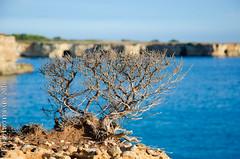 Otranto nord (Fabio Protopapa) Tags: sea mare autumn autunno salento otranto pianta plant natura paesaggio