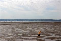 West Kirby Wirral 230816 (13) (Liz Callan) Tags: westkirby wirral sea seaside beach rocks boats ben bordercollie dogs sky water waves buildings lizcallan lizcallanphotography