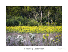Soothing September (baldwinm16) Tags: il illinois midwest prairie autumn fall september sunset wildflowers goldenrod nature natureofthingsphotography