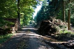 ckuchem-8341 (christine_kuchem) Tags: abholzung baum baumstmme bume einschlag fichten holzeinschlag holzwirtschaft wald waldwirtschaft