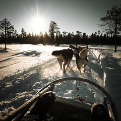 Finland (Zeeyolq Photography) Tags: activity cold dog finland holidays husky lapland sled snow winter rovaniemi laponie finlande