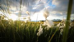 Summer in Iceland (monsieur I) Tags: iceland monsieuri nature roadtrip southiceland summer travel vegetation world