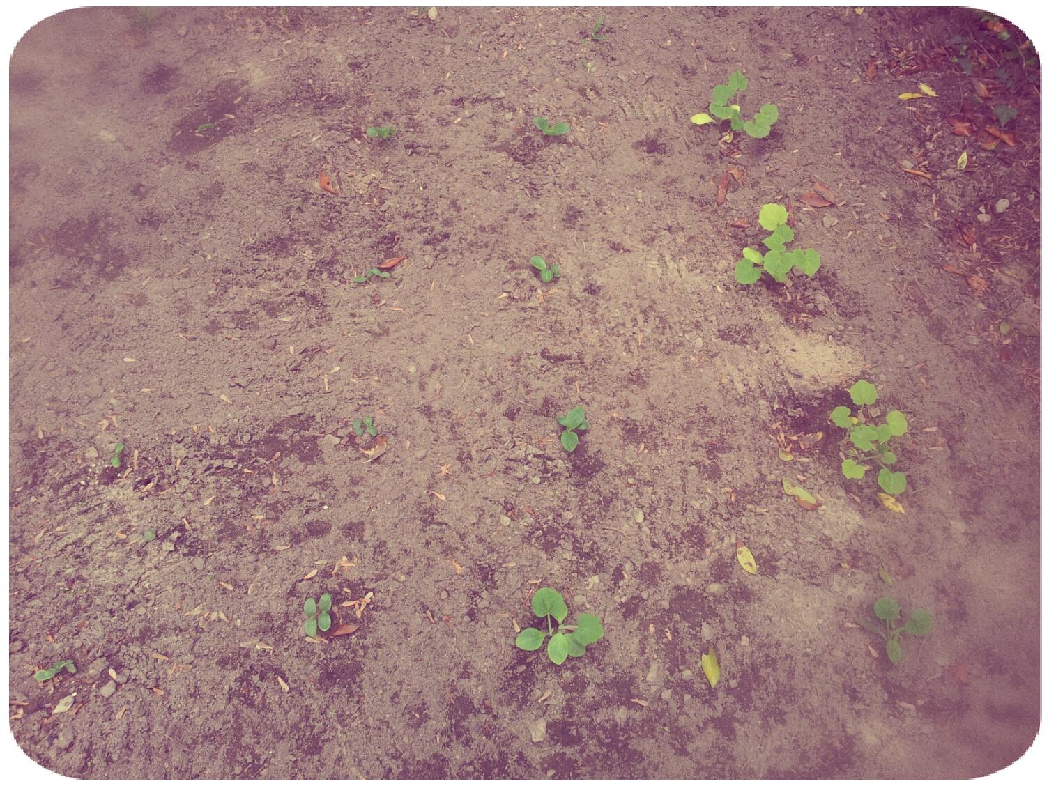 2012-03-30 13.51.30_Melissa_Round.jpg