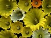 54207-02 Narcissus (horticultural art) Tags: macro closeup cups daffodil horticulture narcissus coronna horticulturalart