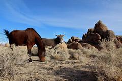 (Tōn) Tags: california ca travel horse nature landscape unitedstates alabama donkey hills mtwhitney lonepine mule rockformation tonyvanlecom