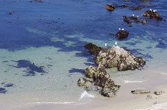 Seagulls at Lovers Point Beach (Niki Gunn) Tags: california ca monterey pentax may montereybay 2012 k5 loverspointbeach
