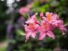 Flower Bokeh 21.05.2012