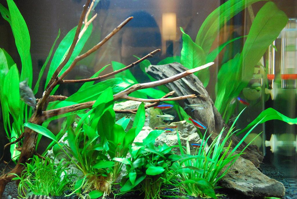 The world 39 s best photos of aquarium and litre flickr for Aquarium 10 litres