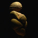 Venus of Willendorf, Right