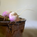 May 9th Turnips For Dinner - Burgundy 2012