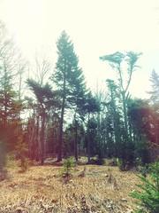 woods walk (M.J.H.) Tags: maine 2012 islesboro