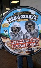ben and puggy's? pug and jerry's? (wombatarama) Tags: pug