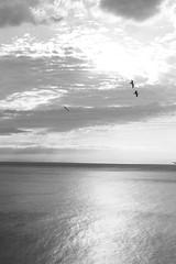 Immagine 474 (nicolaborzi) Tags: light sea italy sun seagulls sparkles silver sushi island dawn boat eyes mediterraneo barca italia sailing ship alba seagull nave tuscany toscana sole gabbiani gabbiano mediterraneansea isola capraia chinesepoetry silversea arcipelagotoscano chineseliterature sudongpo navigazione yinhaijingwei tuscanislands