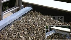 Dakdekker: Bestaande kunststof dakbedekking (slecht product) op de uitbouw van 8 jaar oud gesloopt, vervolgens het dak voorzien van tweelaagse bitumineuze dakbedekking, gemonteerd in IJsselstein