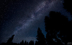 Starlit sky (Light|n|motion | Ethan Caldwell) Tags: trees silhouette forest stars overload yosemitevalley milkyway strands nomoon creepydarkskiesalongthetrail